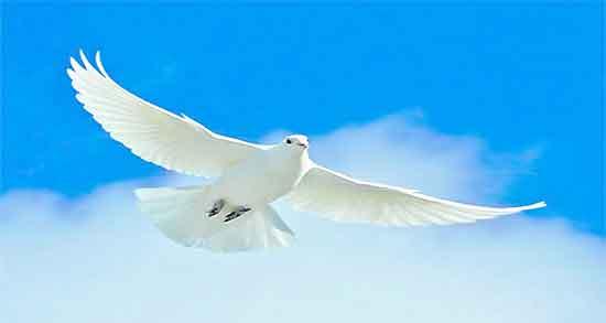 تعبیر خواب کبوتر سفید ، حضرت یوسف زخمی و در قفس و نامه رسان در خانه