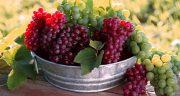 تعبیر خواب انگور قرمز ، درشت یاقوتی چیدن برای زن باردار از امام صادق