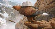 تعبیر خواب عقاب منوچهر مطیعی ، تهرانی و دیدن عقاب با رنگ های مختلف