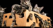 تعبیر خواب گربه پوست کنده ، و کشتن گربه در خواب نشانه چیست