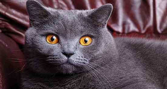 تعبیر خواب گربه طوسی در خانه ، و بچه گربه تازه متولد شده در خانه