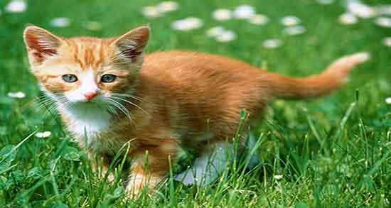 تعبیر خواب گربه سفید قهوه ای ، و خوردن مار توسط گربه سیاه و سفید در خانه