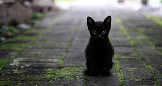تعبیر خواب گربه سیاه کوچک ، و کور و تعبیر خواب سگ گربه را خورد ...