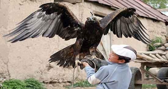 تعبیر خواب غذا دادن به عقاب ، معنی غذا دادن به جوجه عقاب در خواب چیست
