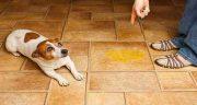 تعبیر خواب ادرار سگ ، روی لباس انسان و دیدن ادرار حیوانات روی فرش