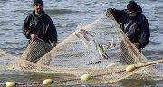 تعبیر خواب ماهیگیری با تور ، در دریا و رودخانه ابن سیرین + ماهی گیری با دست
