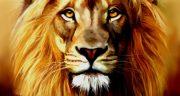 تعبیر خواب شیر جنگل برای زن باردار ، بچه شیر جنگل در خانه حضرت یوسف