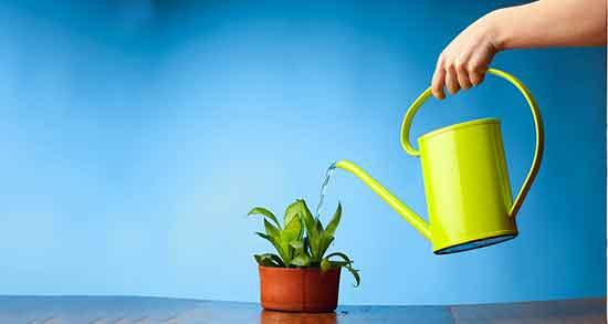 تعبیر خواب آب دادن به گل ، و سبزه و درخت گردو و باغچه در حیاط خانه