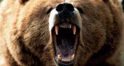 تعبیر خواب خرس قهوه ای حضرت یوسف ، تعبیر خواب خرس پاندا توپ تاپ