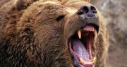 تعبیر خواب خرس آدمخوار ، تعبیر خواب ببر و خرس پاندا حضرت یوسف