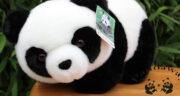 تعبیر خواب خرس پاندا ، سفید در خانه در خواب + تعبیر دیدن خرس پاندا در خواب