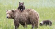 تعبیر خواب خرس سیاه حضرت یوسف ، تعبیر خواب خرس توپ تاپ