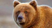 تعبیر خواب خرس توپ تاپ ، خرس سیاه و قهوه ای و کوالا + خرس پاندا