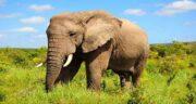 تعبیر خواب ادرار فیل ، معنی دیدن ادرار فیل در خواب ما چیست