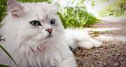 تعبیر خواب اذان گفتن گربه ، معنی اذان گفتن گربه در خواب های ما چیست