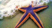 تعبیر خواب ستاره دریایی ، در خانه و دیدن عروس دریایی و هشت پا چیست