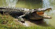 تعبیر خواب تمساح در خواب ؛ معنی دیدن تمساح در خواب های ما چیست