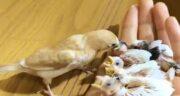 تعبیر خواب جوجه پرنده ، معنی دیدن جوجه پرنده در خواب های ما چیست