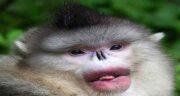 تعبیر خواب حرف زدن میمون ، معنی حرف زدن و صحبت کردن با میمون در خواب