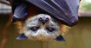 تعبیر خواب حمله خفاش سیاه ، معنی حمله کردن خفاش سیاه در خواب به ما چیست