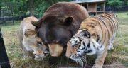 تعبیر خواب خرس و پلنگ ، دیدن خرس و پلنگ در خواب چه معنایی دارد