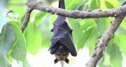 تعبیر خواب خفاش سیاه ، معنی دیدن و حمله خفاش سیاه به انسان در خواب چیست