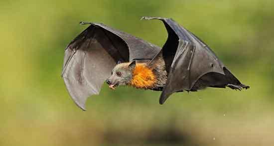 تعبیر خواب خفاش یونگ ، معنی دیدن خفاش از دید روانشناسی یونگ در خواب چیست