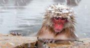 تعبیر خواب خندیدن میمون ، معنی خندیدن میمون در خواب چیست