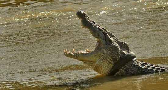 تعبیر خواب دیدن تمساح ؛ معنی دیدن تمساح در خواب های ما چیست