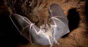 تعبیر خواب دیدن خفاش در خواب ، معنی دیدن خفاش در خواب چیست
