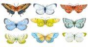 تعبیر خواب دیدن پروانه ، معنی دیدن پروانه به رنگ های مختلف در خواب ما چیست