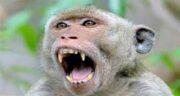 تعبیر خواب شیر دادن به میمون ، معنی شیر دادن به میمون در خواب چیست