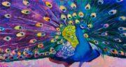 تعبیر خواب طاووس رنگارنگ ، معنی دیدن طاووس رنگارنگ در خواب های ما چیست