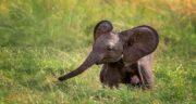 تعبیر خواب عاج فیل ، معنی دیدن عاج فیل در خواب ما چیست