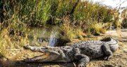 تعبیر خواب فرار از تمساح ؛ معنی فرار از تمساح در خواب های ما چیست