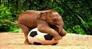 تعبیر خواب فیل اهلی ، معنی دیدن فیل اهلی در خواب ما چیست
