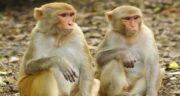 تعبیر خواب مجامعت با میمون ، معنی مجامعت و نزدیکی با میمون چیست