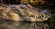 تعبیر خواب مجسمه تمساح ؛ معنی دیدن مجسمه تمساح در خواب های ما چیست
