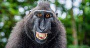 تعبیر خواب مدفوع میمون ، معنی دیدن مدفوع میمون در خواب چیست