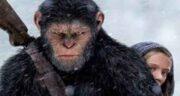 تعبیر خواب میمون بزرگ ، معنی دیدن میمون بزرگ در خواب چیست