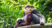 تعبیر خواب میمون سیاه ، معنی دیدن میمون سیاه در خواب چیست