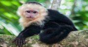 تعبیر خواب میمون های سیاه ، معنی دیدن دسته میمون های سیاه در خواب چیست