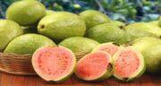 تعبیر خواب میوه گواوا ، معنی دیدن میوه گواوا در خواب های ما چیست