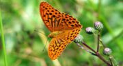 تعبیر خواب پروانه زرد ، معنی دیدن پروانه زرد و آبی و قرمز و سبز در خواب چیست