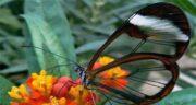 تعبیر خواب کشتن پروانه ، معنی کشتن پروانه در خواب های ما چیست