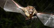 تعبیر خواب گرفتن خفاش ، معنی گرفتن و جنگیدن و کشتن خفاش در خواب چیست