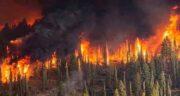 تعبیر خواب آتش سوزی جنگل ؛ معنی دیدن آتش سوزی جنگل در خواب های ما چیست