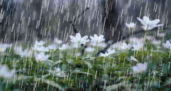 تعبیر خواب باران از نظر حضرت یوسف ؛ امام صادق و ابن سیرین و یونگ