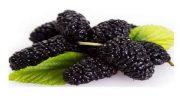 تعبیر خواب توت و انگور ؛ معنی دیدن توت و انگور در خواب های ما چیست