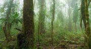 تعبیر خواب جنگل بارانی ؛ معنی دیدن جنگل بارانی در خواب های ما چیست